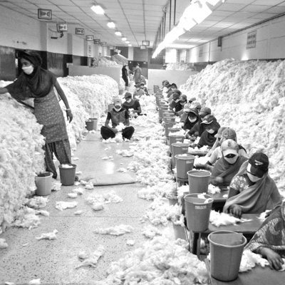 Manually processing cotton in an Indian factory