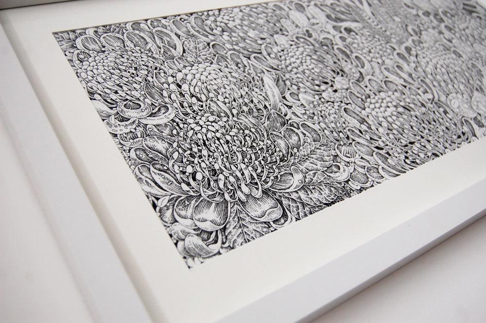 Waratahs illustration by Victoria Gray